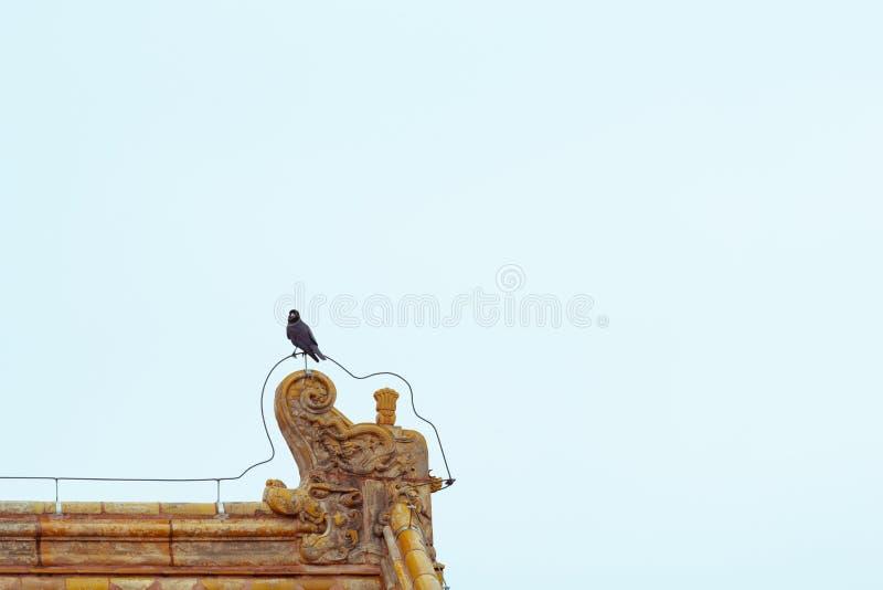 在皇家黄色屋顶装饰的一个乌鸦身分与拷贝空间 图库摄影