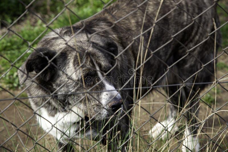 在狗窝锁的狗 库存照片
