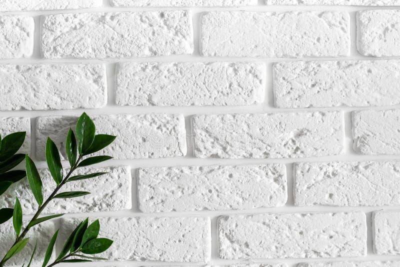 在白色砖墙现代家庭室内设计背景的绿色植物分支 图库摄影