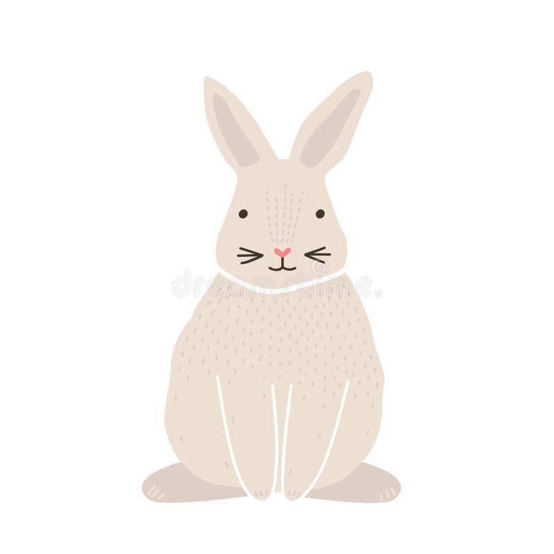 在白色背景或者野兔隔绝的逗人喜爱的可爱的俏丽的白色兔宝宝、兔子 滑稽的可爱的宠物或野生森林动物 库存例证
