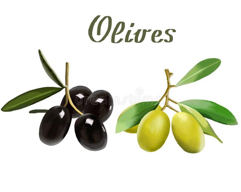 在白色背景的成熟橄榄在例证 向量例证