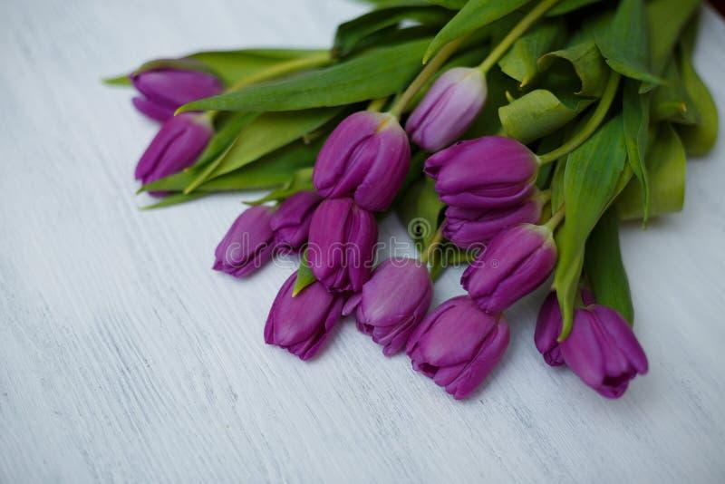 在白色背景的紫色郁金香 图库摄影