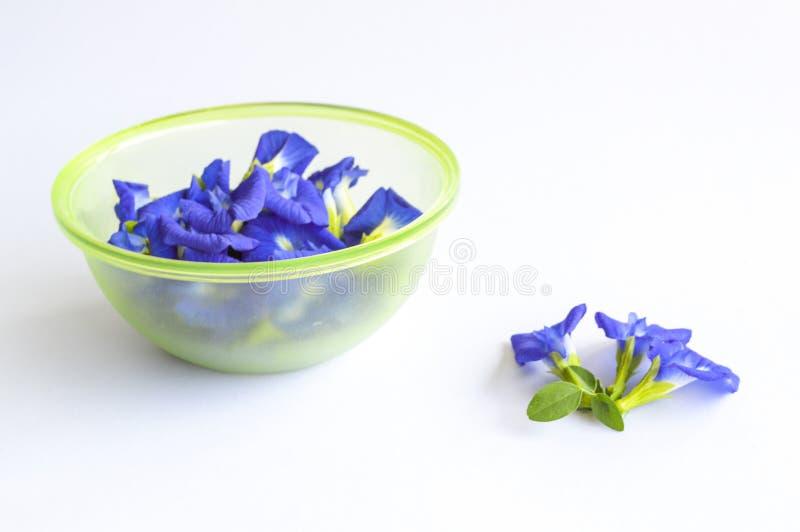 在白色背景的蓝色蝴蝶豌豆花 免版税库存图片