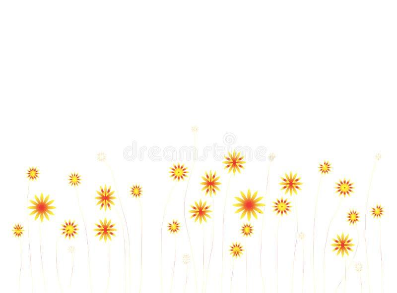 在白色背景的黄色和橙色花 库存照片