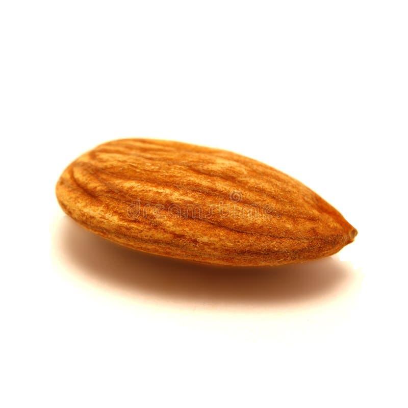 在白色背景隔绝的坚果,种子样式,宏指令 细节纹理样式,种子纹理,谷物食物 免版税库存照片