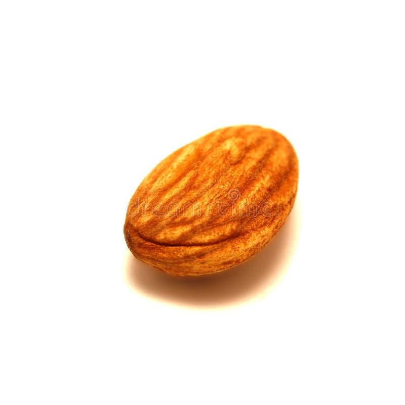 在白色背景隔绝的坚果,种子样式,宏指令 细节纹理样式,种子纹理,谷物食物 免版税库存图片