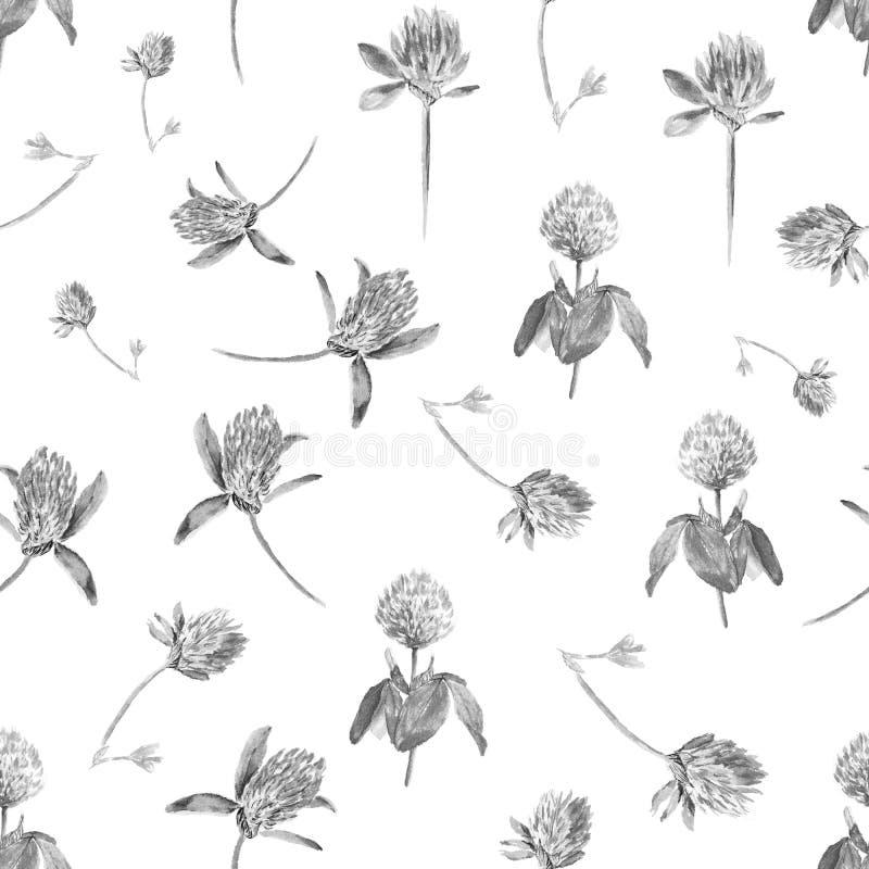 在白色隔绝的水彩三叶草在黑白 与开花的桃红色三叶草的柔和的无缝的样式 逗人喜爱 库存图片