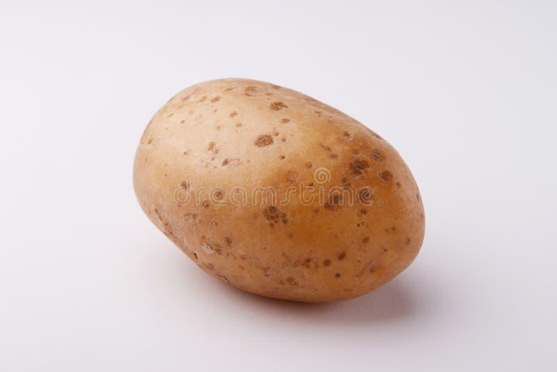 在白色backgroun的一个土豆 库存图片