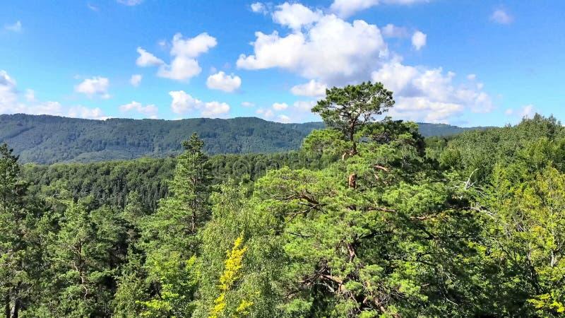 在用绿色森林盖的山的寄生虫空中飞行,a 库存图片