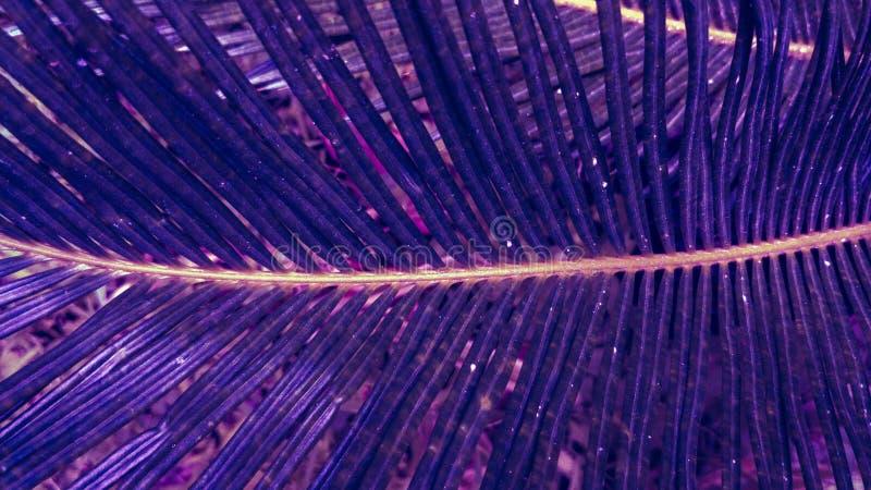 在紫色蓝色梯度口气的异乎寻常的棕榈叶 免版税图库摄影