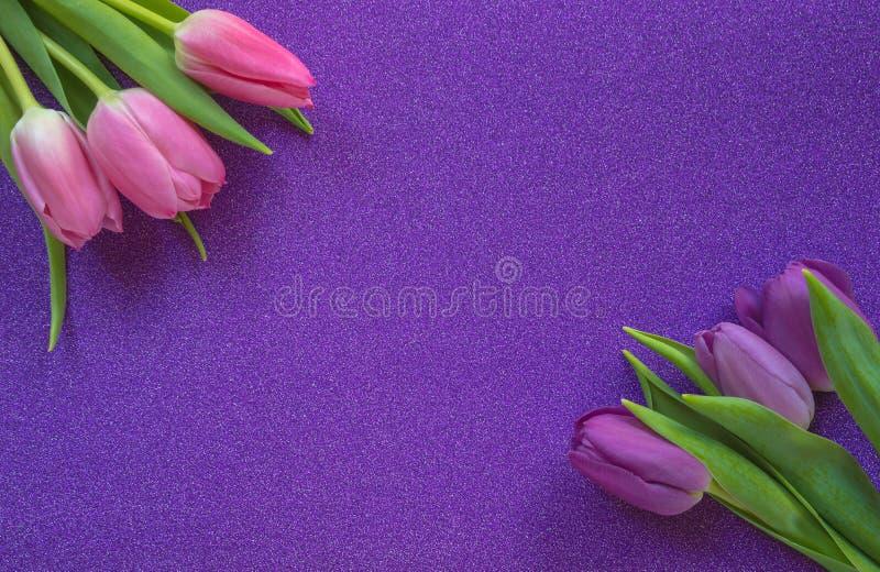 在紫色闪烁背景的紫色和桃红色郁金香与拷贝空间 免版税图库摄影