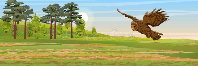在草甸的黄褐色的猫头鹰飞行 杉木、云杉的树和草 欧亚大陆和斯堪的那维亚的野生动物和鸟 向量例证