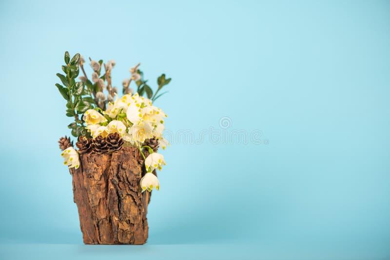 在装饰花瓶的花 Leucojum vernum是第一春天雪花,演播室射击 库存照片