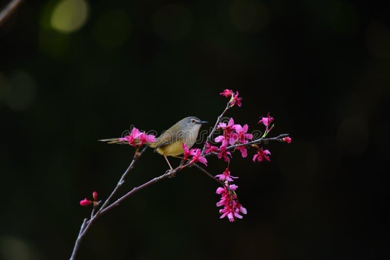 在花的一只美丽的鸟在黑背景中 免版税库存图片