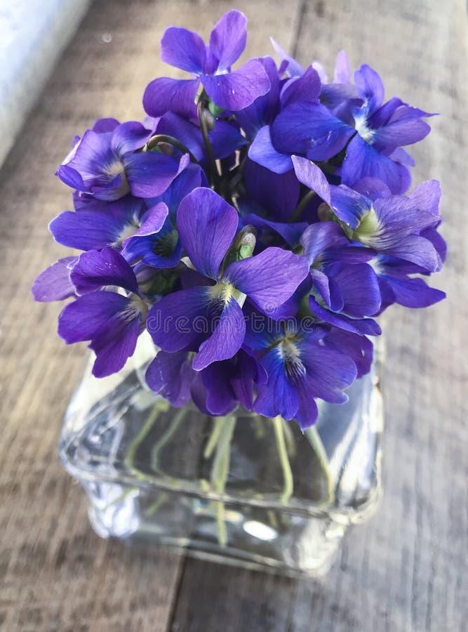 在花瓶的蓝色/紫色紫罗兰色花 免版税库存照片