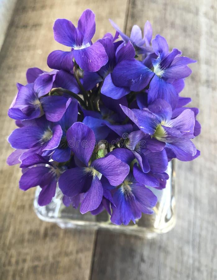 在花瓶的蓝色/紫色紫罗兰色花 库存照片