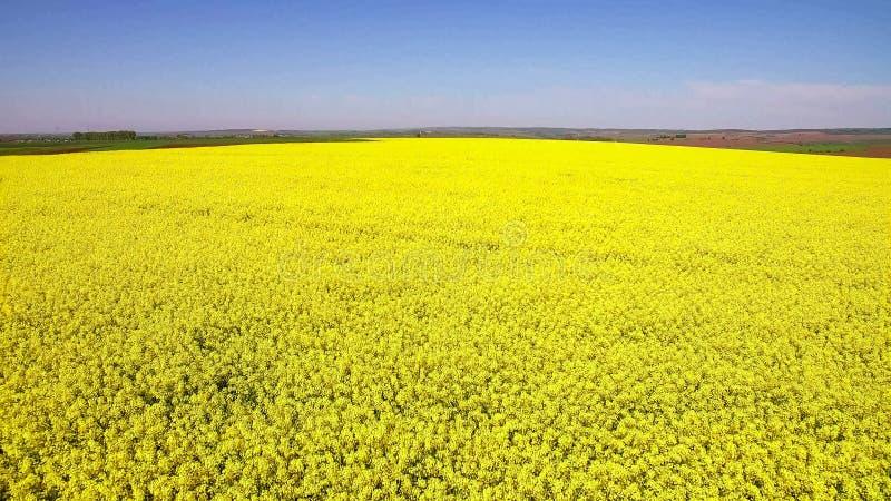 在领域的飞行与开花的油菜花 空中英尺长度 库存照片
