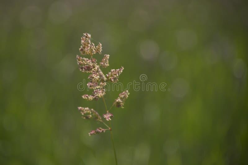 在领域的野草 库存图片