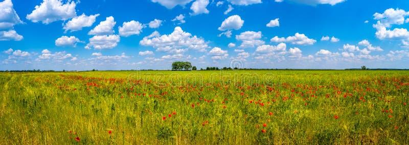 在鸦片和美好的自然的红色领域的春天精神在天空蔚蓝,乡下下的全景 免版税图库摄影
