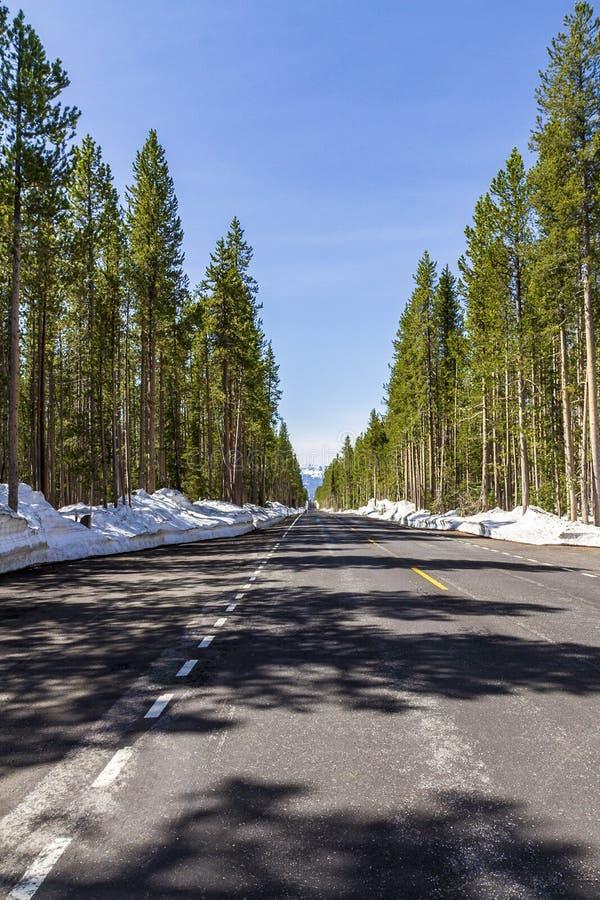 在黄石国家公园里面的空的路 免版税库存图片