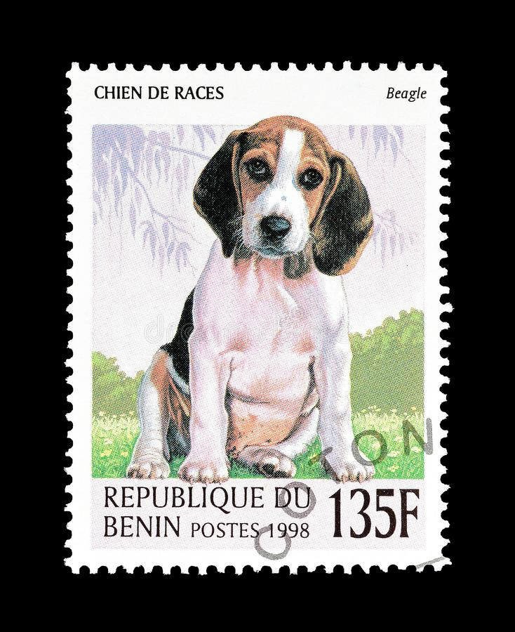 在邮票的小猎犬 库存照片