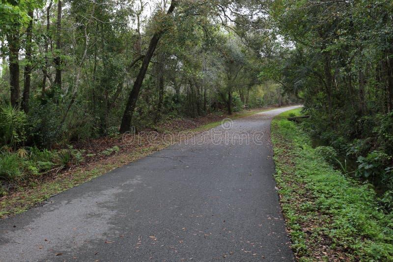 在雨之后的自行车道路和热带 库存照片