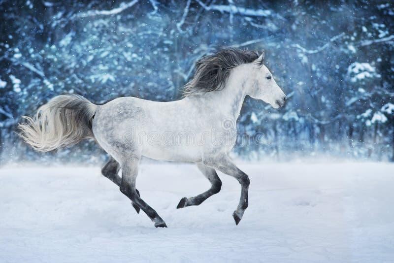 在雪的白马 免版税图库摄影