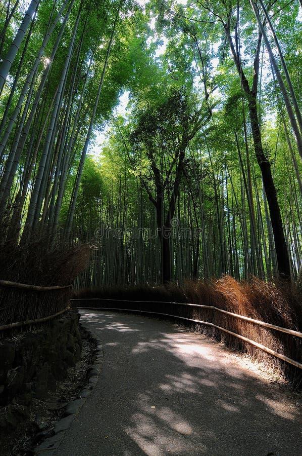 在Arashiyama竹森林的走道在日本 免版税库存照片