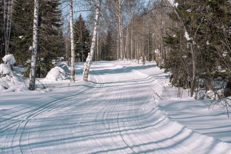 在snowcat的森林踪影的滑雪足迹 滑雪的足迹在运动员的森林冬天森林里 库存图片
