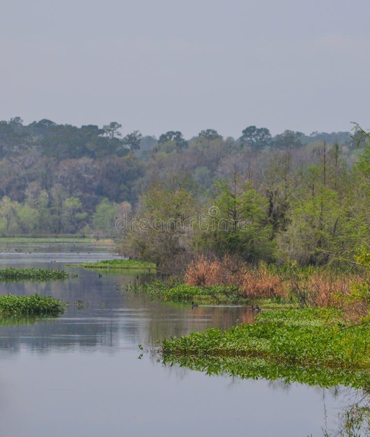 在Suwanee河,Ichetucknee的一个小海湾反弹国家公园,佛罗里达 免版税库存照片