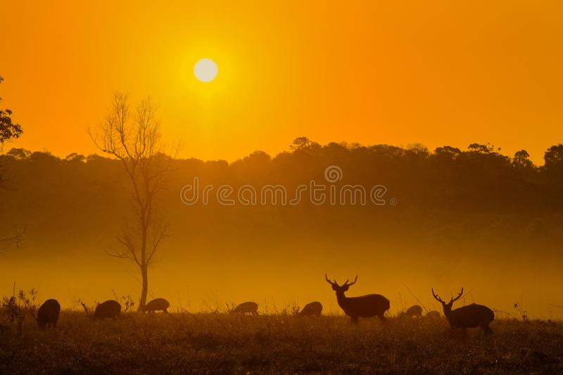 在Thung Kraang猜也奔府,泰国的日落鹿 免版税库存图片
