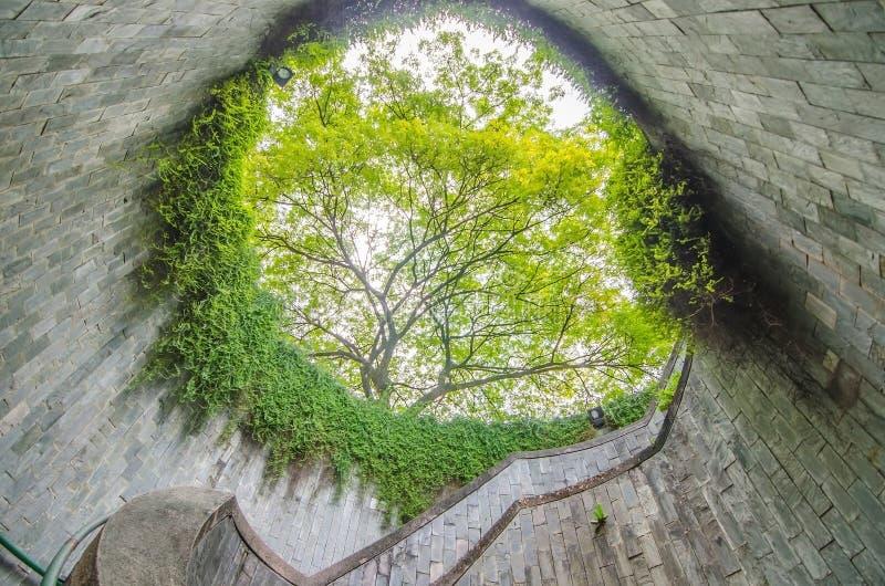 地下横穿螺旋形楼梯和树在堡垒装于罐中的公园,新加坡的隧道 图库摄影