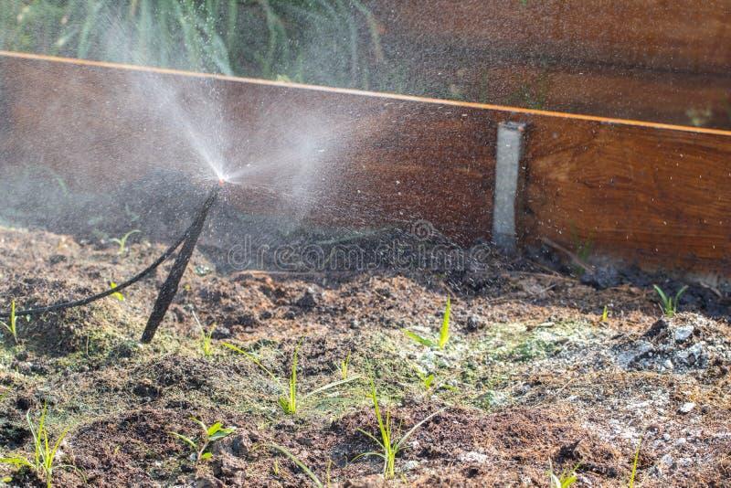 土壤真菌在庭院里 免版税库存图片