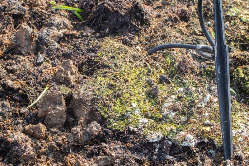 土壤真菌在庭院里 库存照片