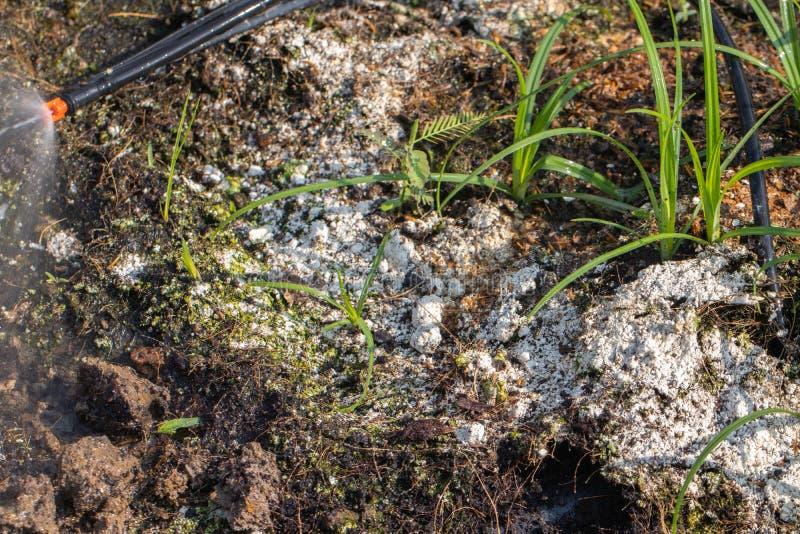 土壤真菌在庭院里 图库摄影