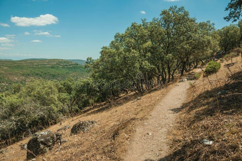 土道路穿过在塔霍河谷附近的森林沼地 库存图片