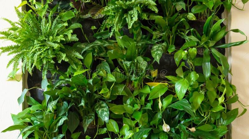 办公室或家内部有自然绿色植物墙壁的 库存照片