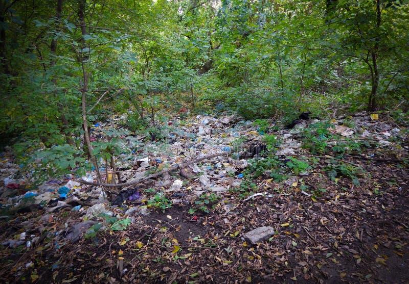 垃圾在森林里,自然的污染与废物的 免版税库存图片
