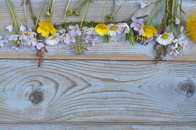 Łąki pola kwiaty na tekstury błękitnych popielatych drewnianych deskach opróżniają kopii astronautycznego tło obrazy royalty free
