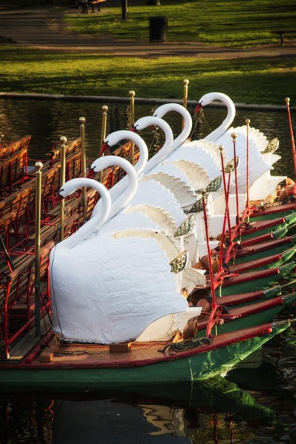 Łabędzie łodzie w Boston jawnym ogródzie w lecie obraz stock