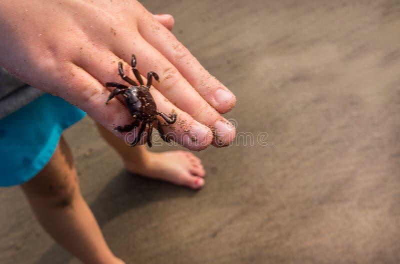 儿童的手藏品在海滩的小螃蟹 免版税库存照片