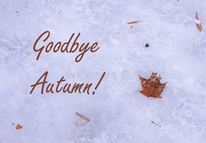 再见秋天 在冰位置的橙色干枫叶在地面的 第一霜和雪户外,寒假的概念 免版税库存图片