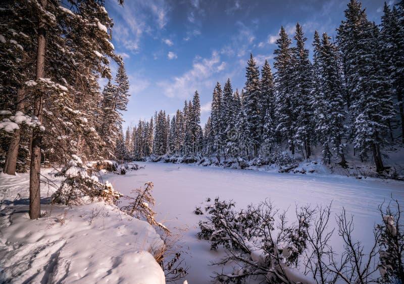 冬天妙境在鱼有明亮的蓝天的小河公园 免版税库存照片