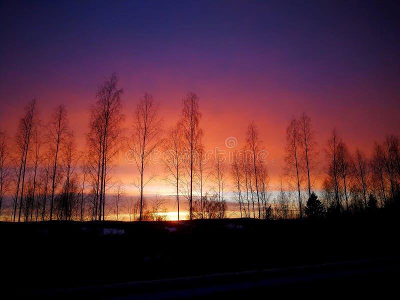 冬天光在Harads 库存图片