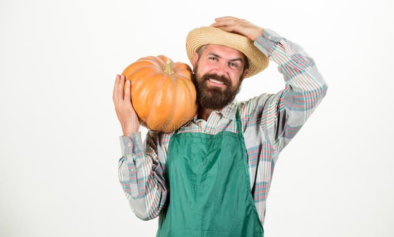 农夫草帽运载大南瓜 种田和农业 农业种子肥料和有胡子收获的人 库存照片