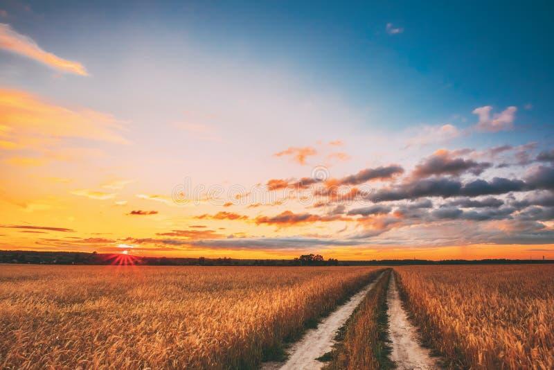 农村乡下路通过麦田风景 黄色大麦领域在夏天 幻想收获蒙太奇季节 库存照片