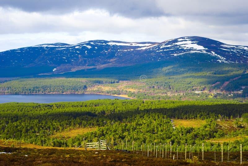 凯恩戈姆山脉山,高地,苏格兰 免版税库存照片