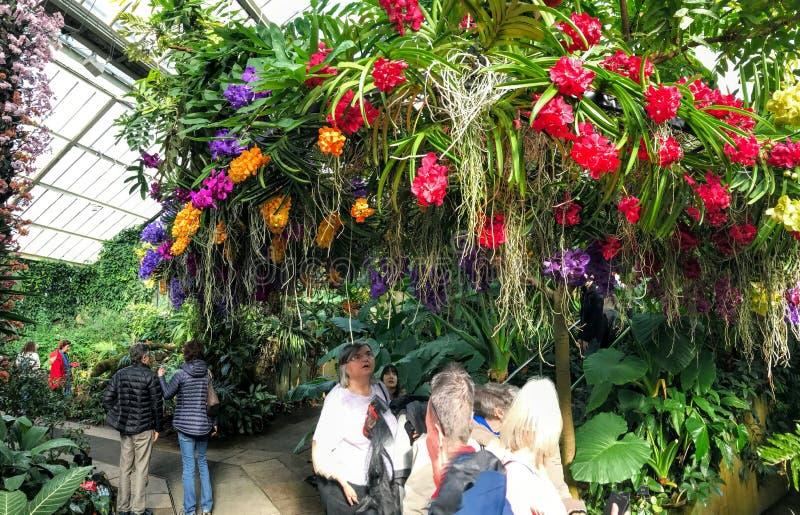 兰花的基奥Gardens'庆祝 库存图片
