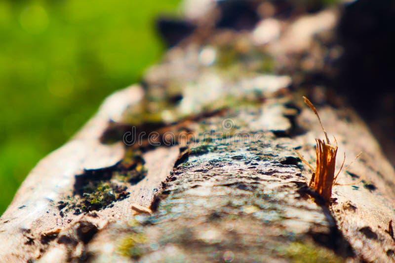 关注细节-木头 免版税库存图片