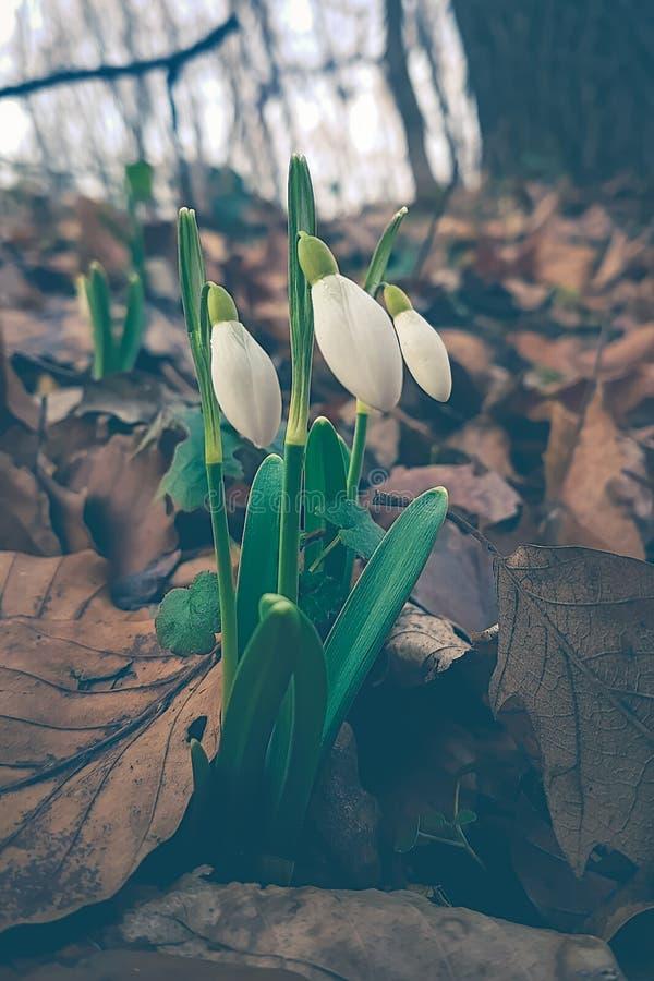 关闭绿色风景围拢的紫色春天花 免版税库存图片